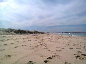 Deb's Beach Shots