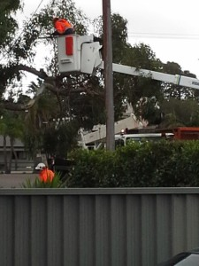 SES busily cutting trees off wires
